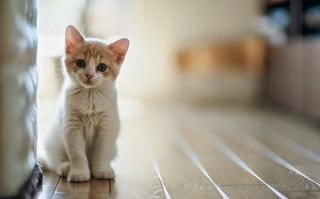 Mơ thấy mèo trong góc hình ảnh