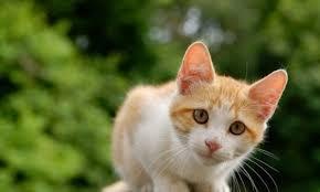 Mơ thấy mèo hình ảnh 1